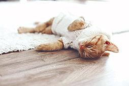 リビングダイニングの床には先進の床暖房システムを採用。健康的で理想的な暖房といわれる「頭寒足熱」を実現しました。※イメージ