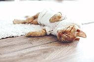 リビングダイニングの床には先進の床暖房システムを採用。健康的で理想的な暖房といわれる「頭寒足熱」を実現しました。