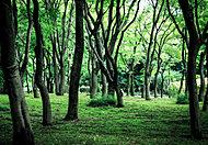 北の丸公園 約560m(徒歩7分)