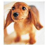 家族の一員として、人にやすらぎをもたらすペットの役割が注目されています。管理規約に準じて、住戸内でペットとの同居が可能となっています。※1