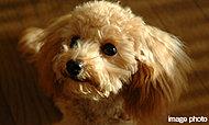 大切な家族であるペットも一緒にお住まいいただけます。※管理規約で定められたサイズ・種類に限ります。