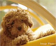 ペットは大切な家族の一員。本マンションではペットの飼育が可能です。※管理規約で定められたサイズ・種類に限ります。