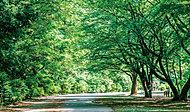 都立小山内裏公園 約180m(徒歩3分)