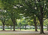 青葉公園 約340m(徒歩5分)