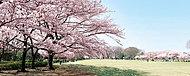 都立東村山中央公園 約320m(徒歩4分)
