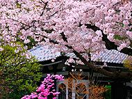 鎌倉長谷寺 約970m(徒歩13分)