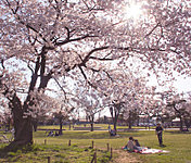 武蔵野中央公園 約2.0km(自転車8分)
