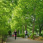 林試の森公園 約1,090m(徒歩14分)