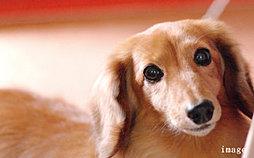 家族の一員であるペットといっしょに暮らせます。(体重15kg 3匹まで飼育可能です。詳しくは係員へお尋ねください。)