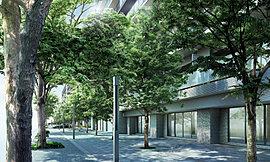 ここは既存樹のケヤキと新たに植樹されたシラカシが交響曲を織りなす美しきアプローチ。