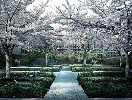 プライベートガーデンの奥に広がるのは、地域コミュニティの場となる「桜ガーデン」。ここは春の喜びびをつなげる、日本古来の風景に憩う「花鳥風月」の趣きを演出している。