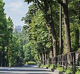 赤坂御用地 約100m