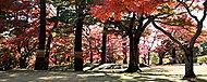 都立殿ヶ谷戸庭園 約250m(徒歩4分)