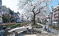 播磨坂 約910m(徒歩12分)