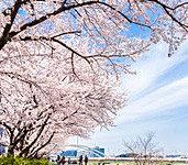 鶴見川河川敷 約1,320m(徒歩17分) ※2014年4月撮影