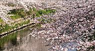 山崎川 約340m(徒歩5分)