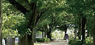 京橋川河畔公園 約60m(徒歩1分)