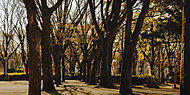 白川公園 約10m(徒歩1分)