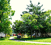 琴似なかよし公園 約100m(徒歩2分)