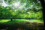 代々木公園 約400m(徒歩5分)