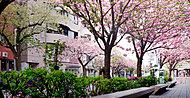 桜新町駅 約800m(徒歩10分)