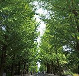 県庁前銀杏並木※1 約140m(徒歩2分)