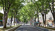 馬場大門のケヤキ並木 約370m(徒歩5分)