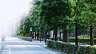 現地から三鷹駅へ向かう並木道 約600m(徒歩8分)