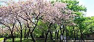 希望ヶ丘公園 約660m(徒歩9分)