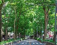 けやき並木通り 約90m(徒歩2分)