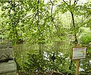 こんぶくろ池公園(平成22年7月撮影) 約370m(徒歩5分)