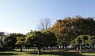 都立青山公園 約90m