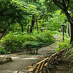 林試の森公園 約500m