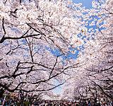 上野恩賜公園 約1,570m