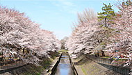 善福寺川緑地 約1,200m(徒歩15分)