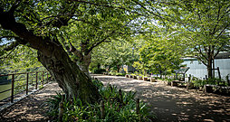 千鳥ヶ淵緑道 約1,030m(徒歩13分)