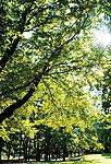 善福寺川緑地公園 約1,090m(徒歩14分)