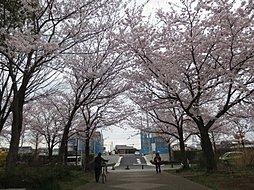 大塚山公園の桜...