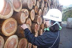 ◆原木確認作業...