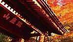 円覚寺(約2,510m / 徒歩32分) ※平成27年6月撮影。※掲載の徒歩分数は1分=80mで算出し、端数を切り上げしたものです。