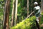 埼玉の桧を1年以上自然乾燥させた木材で建てる家。2016年度グッドデザイン賞受賞