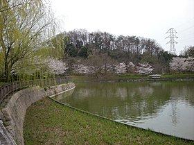 おススメPOINT(3)野鳥や大池にはフナやコイが生息してます!