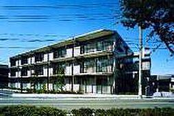 神奈川県横浜市泉区中田北3丁目の賃貸マンションの外観