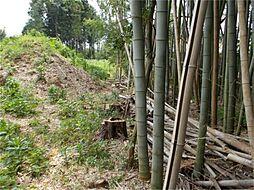 西側の隣地に竹...