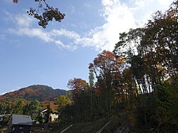 5号地の山林