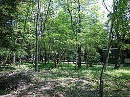 森の中にありな...