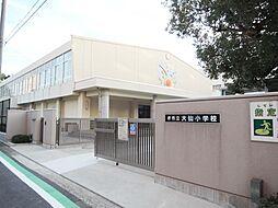 小学校 堺市立...