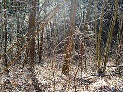 緑の季節には森...