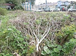 伐採した木は撤...