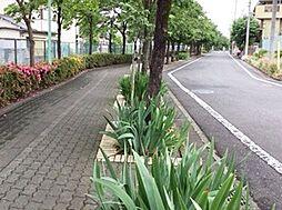公道の横には緑...